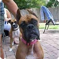 Adopt A Pet :: Jezebel - Tallahassee, FL