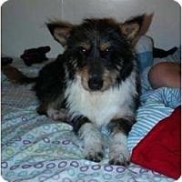 Adopt A Pet :: Buck - Oceanside, CA