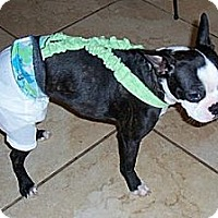 Adopt A Pet :: Izzy (Courtesy Post) - Lynnwood, WA