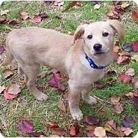 Adopt A Pet :: Sawyer - Cumming, GA