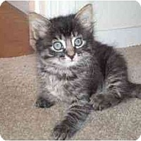 Adopt A Pet :: Sweet Pea - Davis, CA
