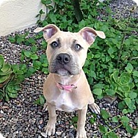 Adopt A Pet :: Lady - Katy, TX