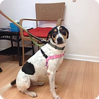 Adopt A Pet :: Amy - Gainesville, FL