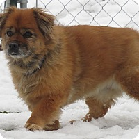 Adopt A Pet :: Charleen - Meridian, ID