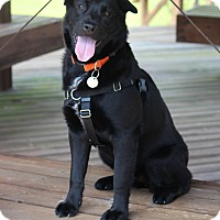 Adopt A Pet :: Sophi - Pinehurst, NC