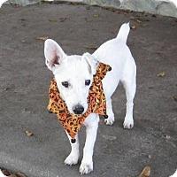 Adopt A Pet :: TUCKER - Terra Ceia, FL