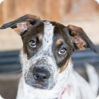 Adopt A Pet :: Korie - Scottsdale, AZ