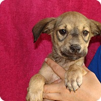Adopt A Pet :: Maverick - Oviedo, FL