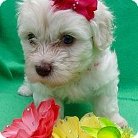 Adopt A Pet :: Edelweiss - Irvine, CA