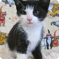 Adopt A Pet :: ORTENSIA - New Cumberland, WV