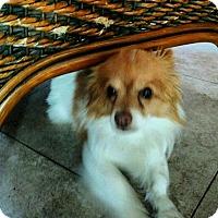 Adopt A Pet :: Clarence - San Diego, CA
