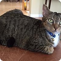 Adopt A Pet :: Lizzy - Gainesville, VA