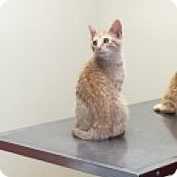 Adopt A Pet :: Boots - McHenry, IL