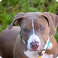 Adopt A Pet :: Precious - Navarre, FL