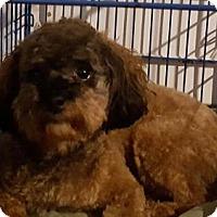 Adopt A Pet :: Finley 2016 - Cary, NC