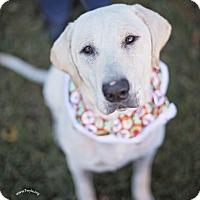 Adopt A Pet :: Lexie - Kingwood, TX