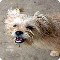 Adopt A Pet :: TIGER - Fort Walton Beach, FL