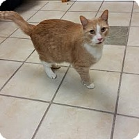 Adopt A Pet :: Sullivan - Chippewa Falls, WI