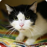 Adopt A Pet :: Jersey - Kettering, OH