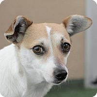 Adopt A Pet :: Ava - Burlingame, CA