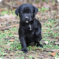Adopt A Pet :: Barbie - Groton, MA