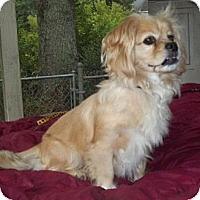Adopt A Pet :: Maggi - Mooy, AL