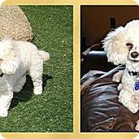 Adopt A Pet :: Chase - Scottsdale, AZ