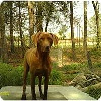 Adopt A Pet :: Katie - Emory, TX
