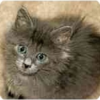 Adopt A Pet :: Jewel - Arlington, VA
