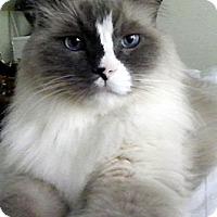 Adopt A Pet :: Bubba - Alexandria, VA