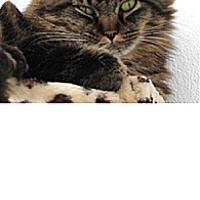 Adopt A Pet :: Ernie #2 - El Cajon, CA