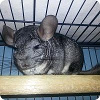 Adopt A Pet :: Sandy - Jacksonville, FL