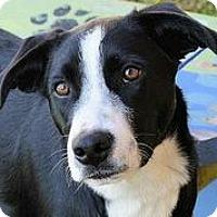 Adopt A Pet :: Travis - Austin, TX