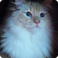 Adopt A Pet :: Singer - Ennis, TX