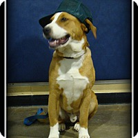 Adopt A Pet :: Max - Indian Trail, NC