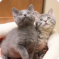 Adopt A Pet :: Tisket & Tasket - Chicago, IL