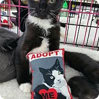 Adopt A Pet :: Jamie - Nuevo, CA