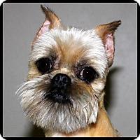 Adopt A Pet :: RHETT in Rogers, AR. - Little Rock, AR