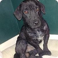 Adopt A Pet :: Barney - Ft. Lauderdale, FL