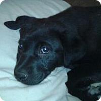 Adopt A Pet :: Verizon - Fort Collins, CO