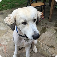 Adopt A Pet :: Lola - Kyle, TX