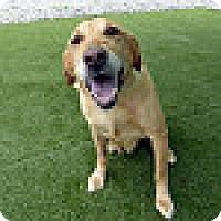 Adopt A Pet :: Sundrop - Yorktown, VA