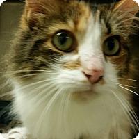 Adopt A Pet :: Cali - Muskegon, MI