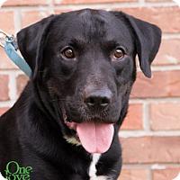 Adopt A Pet :: Gusto - Savannah, GA