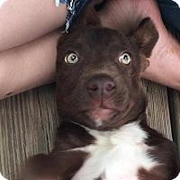 Adopt A Pet :: Twixie - Vass, NC