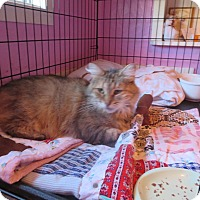Adopt A Pet :: Maggie - Coos Bay, OR