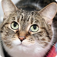 Adopt A Pet :: JINGLES - Royal Oak, MI