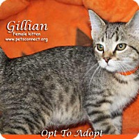 Adopt A Pet :: Gillian - South Bend, IN