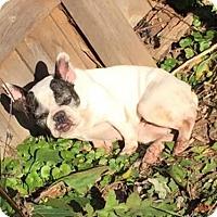 Adopt A Pet :: Ethel - St. Louis Park, MN