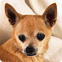 Adopt A Pet :: Pepe - Prescott, AZ
